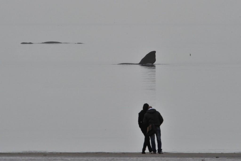 Jovenes observando las Ballenas en Puerto Madryn